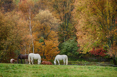 Photograph - Fall Foliage Pasture by Jeff Folger