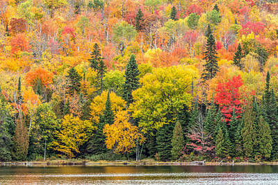 Photograph - Fall Foliage by Pierre Leclerc Photography