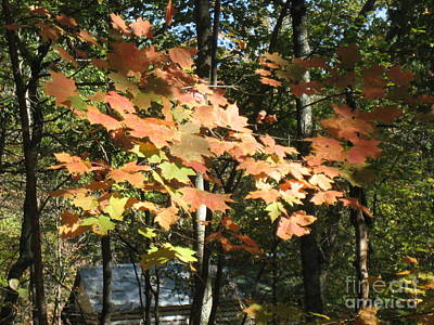 Fall Foliage Art Print by Robin Renee  Blanc
