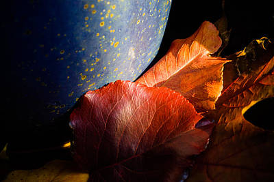 Foliage Photograph - Fall Foliage Still Life by Jeff Folger