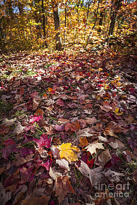 Fall Forest Floor  Print by Elena Elisseeva