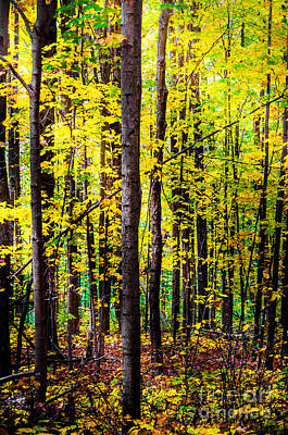 Photograph - Fall Forest by Michael Arend