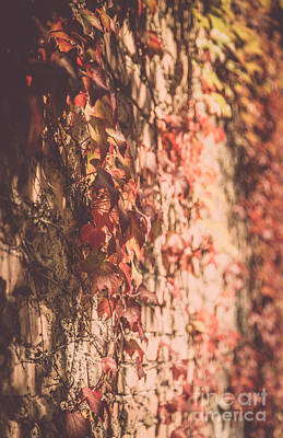 Natural Finish Photograph - A Rustic Fall by Alanna DPhoto