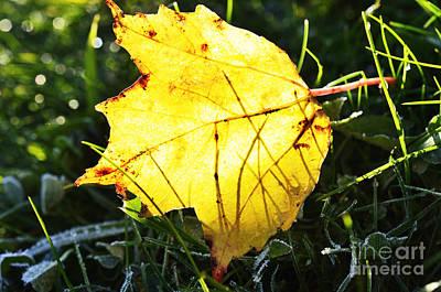 Animal Portraits - Fall Frost Fallen Leaf by Thomas R Fletcher