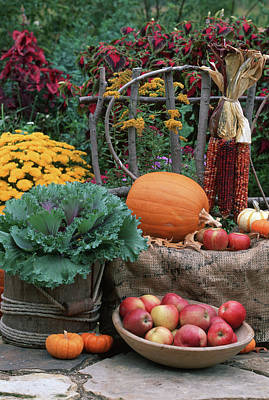 Kale Photograph - Fall Garden Display, Ornamental Kale by Richard and Susan Day