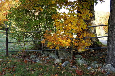 Photograph - Fall Gate by Kerri Mortenson