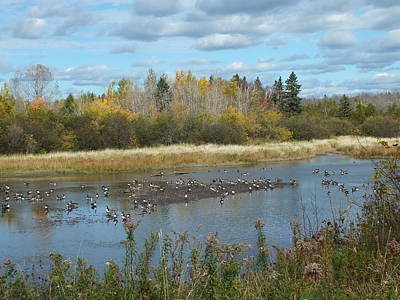 Photograph - Fall Geese by Gene Cyr