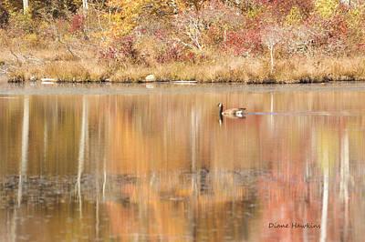 State Love Nancy Ingersoll - Fall goose by Diane Hawkins