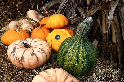 Digital Art - Fall Gourds by Eva Kaufman