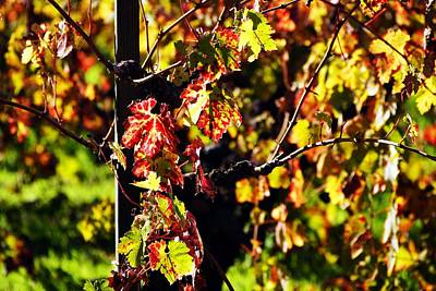 Photograph - Fall Grape Leaves 1 by Michael Courtney