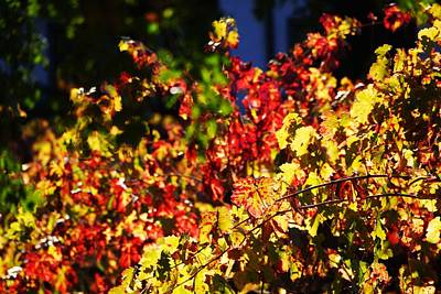 Photograph - Fall Grape Leaves 2 by Michael Courtney