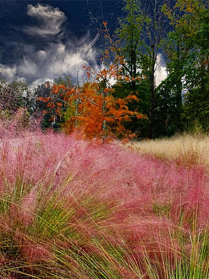 Photograph - Fall Grass And Trees by Bill Barber