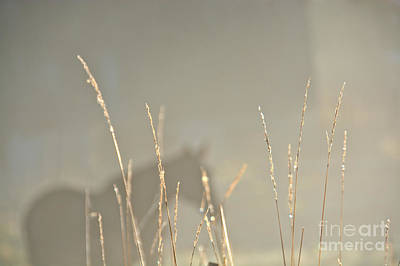 Photograph - Fall Grasses by Cheryl Baxter