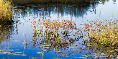 Photograph - Fall Grasses by Natalie Rotman Cote