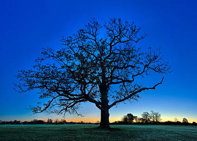 Fall Great Oak At Dawn Art Print by Chris Bordeleau