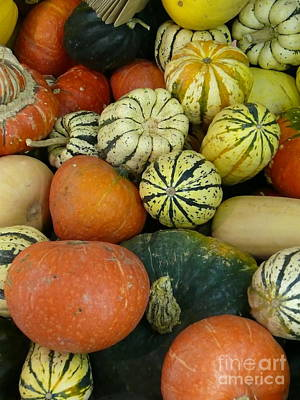 Photograph - Fall Harvest by Terri Thompson