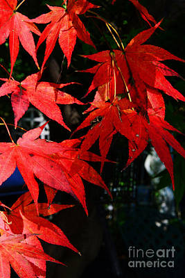 Red Leaves Photograph - Fall Has Arrived by Paul Ward