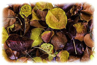 Fall Has Fallen Art Print by Barry Jones