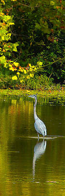 Photograph - Fall Heron by Jeff Kurtz