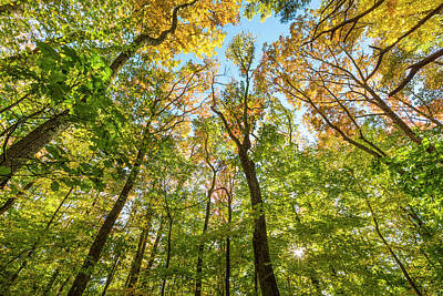Amesbury Photograph - Fall In A Forest In Amesbury by Jerry and Marcy Monkman