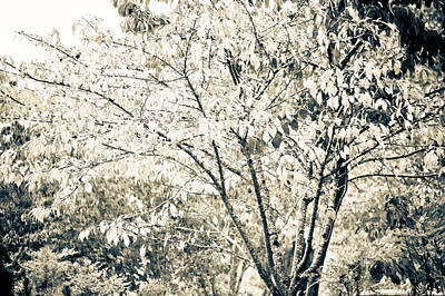 Fall In Black And White Art Print by Ronda Broatch