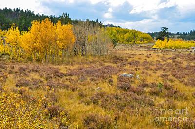 Fall In Colorado Art Print