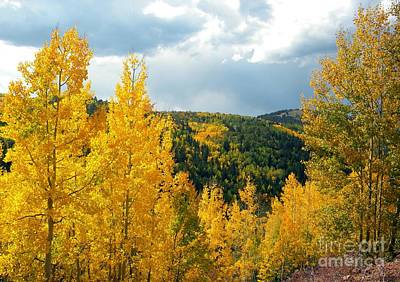 Frizzell Photograph - Fall In Colorado by Michelle Frizzell-Thompson