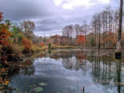 Cypress Swamp Photograph - Fall In Gator Country by JC Findley