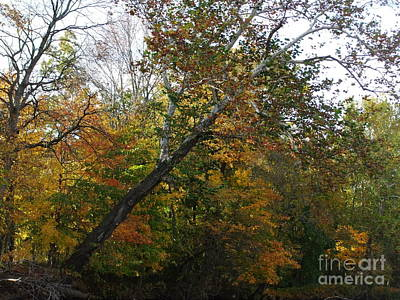 Photograph - Fall In Indiana by Deborah DeLaBarre