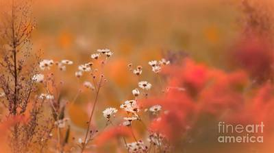 Photograph - Fall In Love With Fall by Bulik Elena