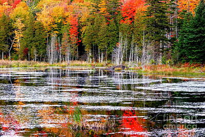 Fall In Maine Art Print by Arie Arik Chen