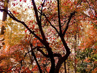 Photograph - Fall In Maryland by John Potts