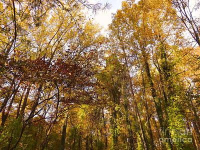 Photograph - Fall In Maryland Usa by John Potts