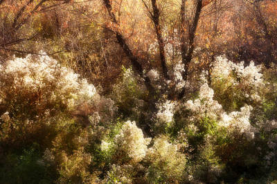 Photograph - Fall In Morongo by Sandra Selle Rodriguez