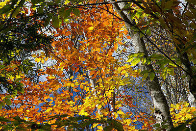 Photograph - Fall In Nh 2 by Natalie Rotman Cote