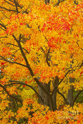Fall Animals - Fall in Pennsylvania by Paul W Faust -  Impressions of Light