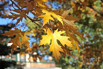 Photograph - Fall In Prescott by Pamela Walrath