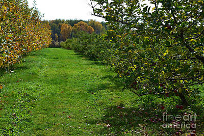 Indiana Photograph - Fall In The Apple Orchard by Amy Lucid