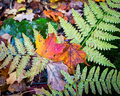 Photograph - Fall In The Ferns by Bill Pevlor