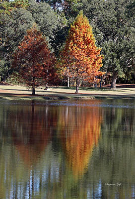 Fall In The Lowcountry Art Print by Suzanne Gaff