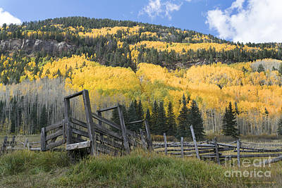 Colorado Photograph - Fall In The San Juans by Jerry McElroy