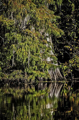 Fall In The Swamp Art Print by Andy Crawford