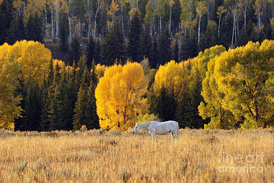 Photograph - Fall In The Tetons by Deby Dixon