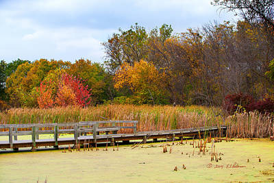 Photograph - Fall In The Wetlands by Edward Peterson