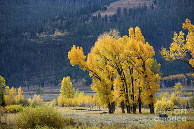 Photograph - Fall In Yellowstone by Deby Dixon