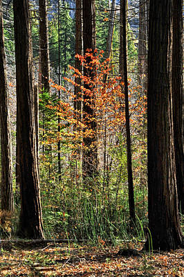 Photograph - Fall In Yosemite by Cat Connor