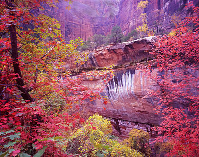 Photograph - Fall In Zion by Ray Mathis