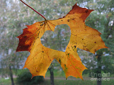 Photograph - Fall Ing In Love by Ausra Huntington nee Paulauskaite
