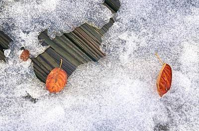 Fall Into Winter Art Print