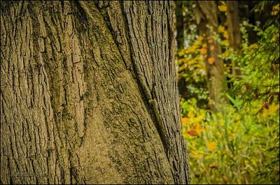 Cold Photograph - Fall Is Comoing by LeeAnn McLaneGoetz McLaneGoetzStudioLLCcom